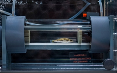 CASE at UNT: Like a treadmill for fish